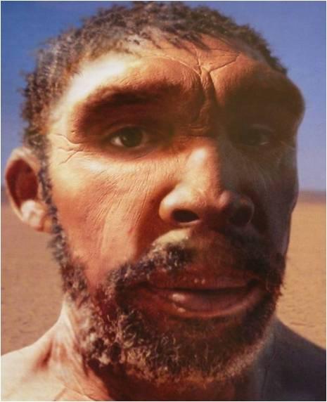 Rhodesiensis