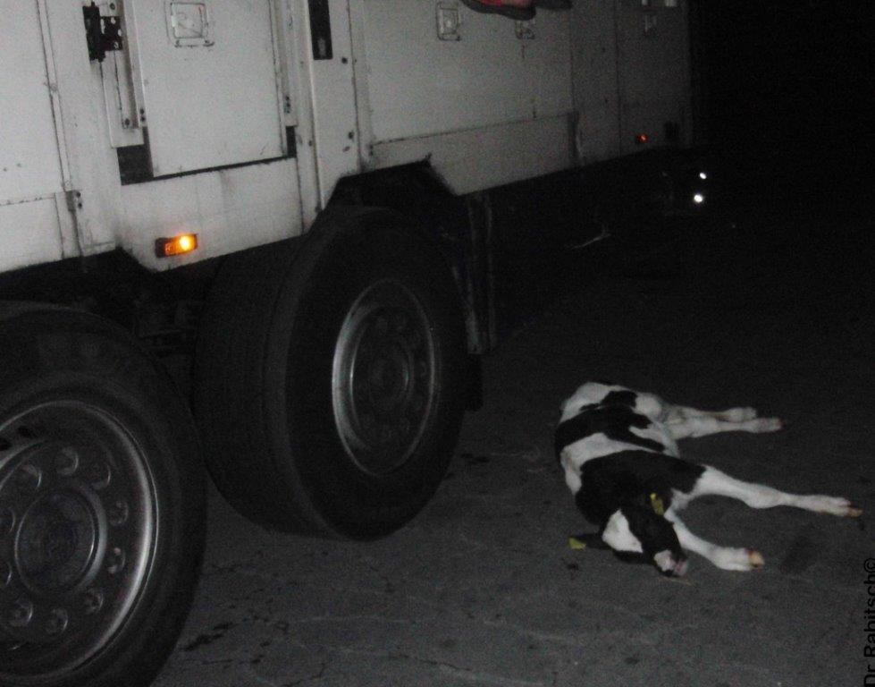 187 Tote Tiere bei Straßenkontrollen