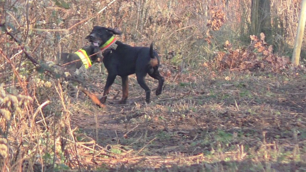 Bildschirmfoto vom 2015-11-30 23:31:04 Hunde klein