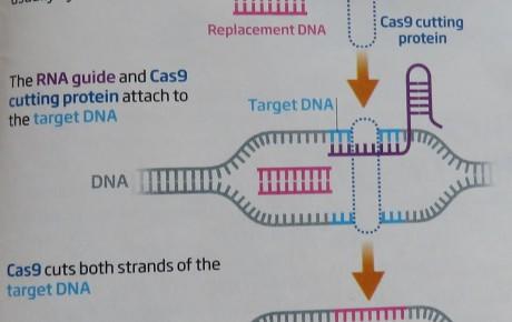 Eine neue Technik der Genmanipulation – wo bleibt die öffentliche Diskussion?
