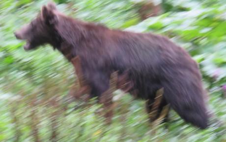 Wildlife suffering – wildlife intervention?