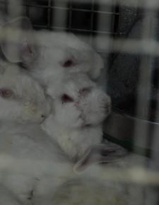 5 Anträge an die Bundestierversuchskommission