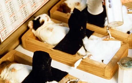 New Scientist sagt: Tierversuche sind der falsche Weg in der Forschung für Menschen