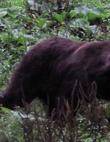 Vorbild Rumänien: Großraubtiere und die Jagd