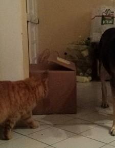 """Mein Hundefreund Kuksi ist ein """"Wunderhund"""""""